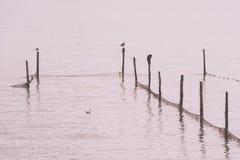 Северный ландшафт моря Стоковая Фотография