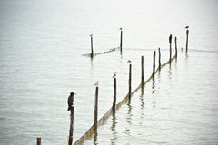 Северный ландшафт моря Стоковая Фотография RF