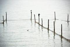 Северный ландшафт моря Стоковое Изображение RF