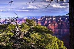 Северный гранд-каньон оправы, Аризона, США Стоковые Изображения RF