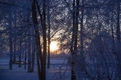 Северный заход солнца Солнце в ветвях стоковые фото