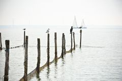 Северный ландшафт моря Стоковое Фото