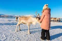 Северный олень маленькой девочки подавая стоковая фотография rf
