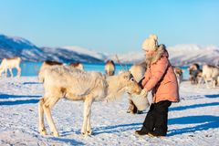 Северный олень маленькой девочки подавая стоковые фото