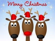 северный олень рождества веселый Стоковые Фотографии RF