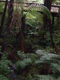 Северный остров Новая Зеландия Стоковые Изображения RF