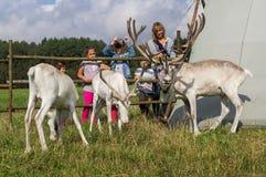 Северный олень в русском зоопарке Стоковые Изображения