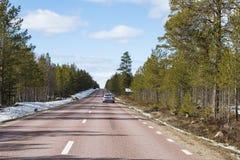 Северный олень на дороге Швеции Стоковые Фото
