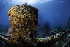 Североамериканские коралловые рифы Стоковые Фотографии RF