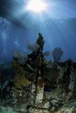 Североамериканские коралловые рифы Стоковая Фотография