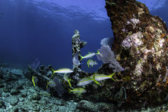 Североамериканские коралловые рифы Стоковое фото RF