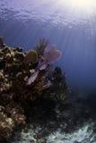 Североамериканские коралловые рифы Стоковые Изображения