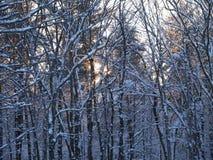 Северо-восточный снег всю ночь Стоковые Фотографии RF