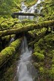 северо-западный водопад потока Стоковое Изображение