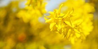 Сезонная весна цветет предпосылка деревьев стоковые фото