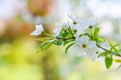 Сезонная весна цветет предпосылка деревьев стоковое изображение rf