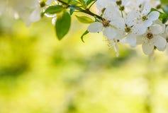 Сезонная весна цветет предпосылка деревьев стоковая фотография rf