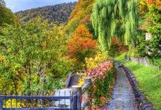 Сезонное листво падения стоковые фото