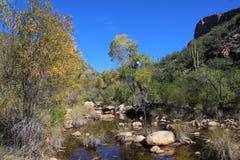 Сезонно пропуская мытье, национальный парк Saguaro, Аризона стоковая фотография rf