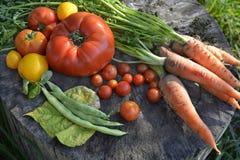 Сезонные овощи стоковое изображение rf