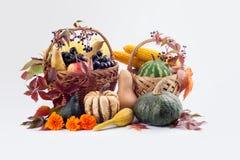 Сезонные плодоовощ и тыквы Стоковые Фото