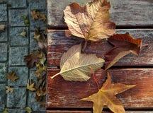Сезонные характеристики осени стоковая фотография