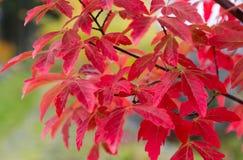 Сезонные цвета Стоковые Фотографии RF