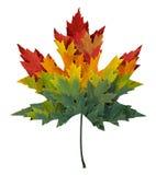 Сезонный кленовый лист Стоковые Фото