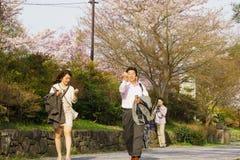 Сезон вишневого цвета ` s Японии Стоковая Фотография RF