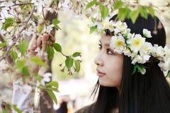сезон вишни цветения Стоковое Изображение RF