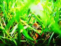Сезон гриба стоковые фотографии rf