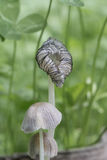 Сезон гриба Стоковые Изображения RF
