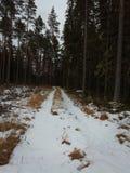 Сезон зимы дороги леса Стоковые Изображения RF