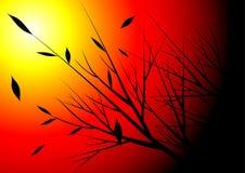 Сезон и заход солнца осени Стоковые Изображения RF