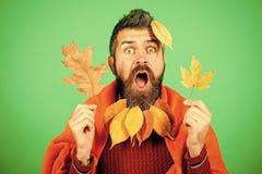 Сезон и осень стоковая фотография
