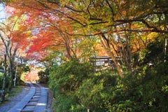Сезон клена на падении, Японии стоковое фото