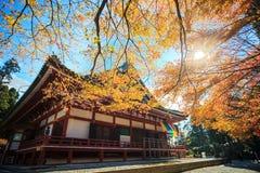 Сезон клена на падении, Японии стоковые фотографии rf