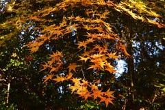 Сезон лист осени стоковые изображения rf