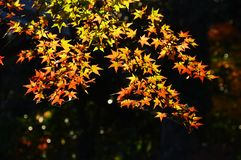 Сезон лист осени стоковое изображение