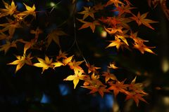 Сезон лист осени стоковые изображения