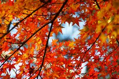 Сезон лист осени стоковое фото rf