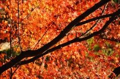 Сезон лист осени стоковые фото