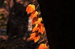 Сезон лист осени стоковая фотография rf