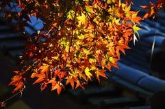 Сезон лист осени стоковые фотографии rf
