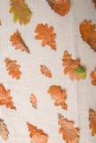 Сезон осени выходит предпосылка Стоковые Фотографии RF