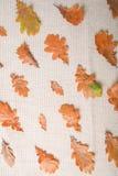 Сезон осени выходит предпосылка Стоковая Фотография
