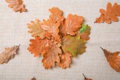 Сезон осени выходит предпосылка Стоковое Изображение RF