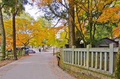 Сезон осени в парке Nara стоковое фото rf