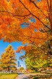 Сезон осени горизонта города Шарлотты стоковые фотографии rf
