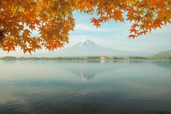 Сезон осени и гора Фудзи в утре с кленом листьев красного цвета Стоковое Изображение RF